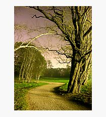 Scary trees Photographic Print