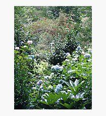 Hydrangea path - June's Garden Photographic Print