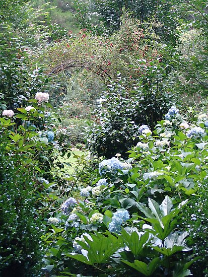 Hydrangea path - June's Garden by May Lattanzio