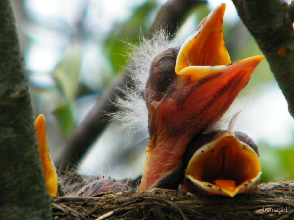 Hungry birdy by bamagirl
