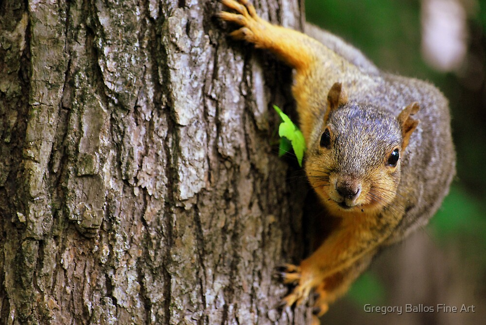 Squirrelly by Gregory Ballos