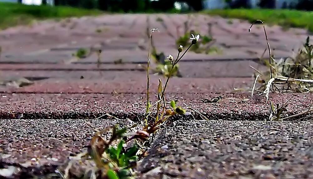 Brick Walkway by Tracy DeVore