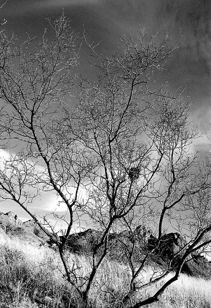 Mountain bush by Distoragraphs