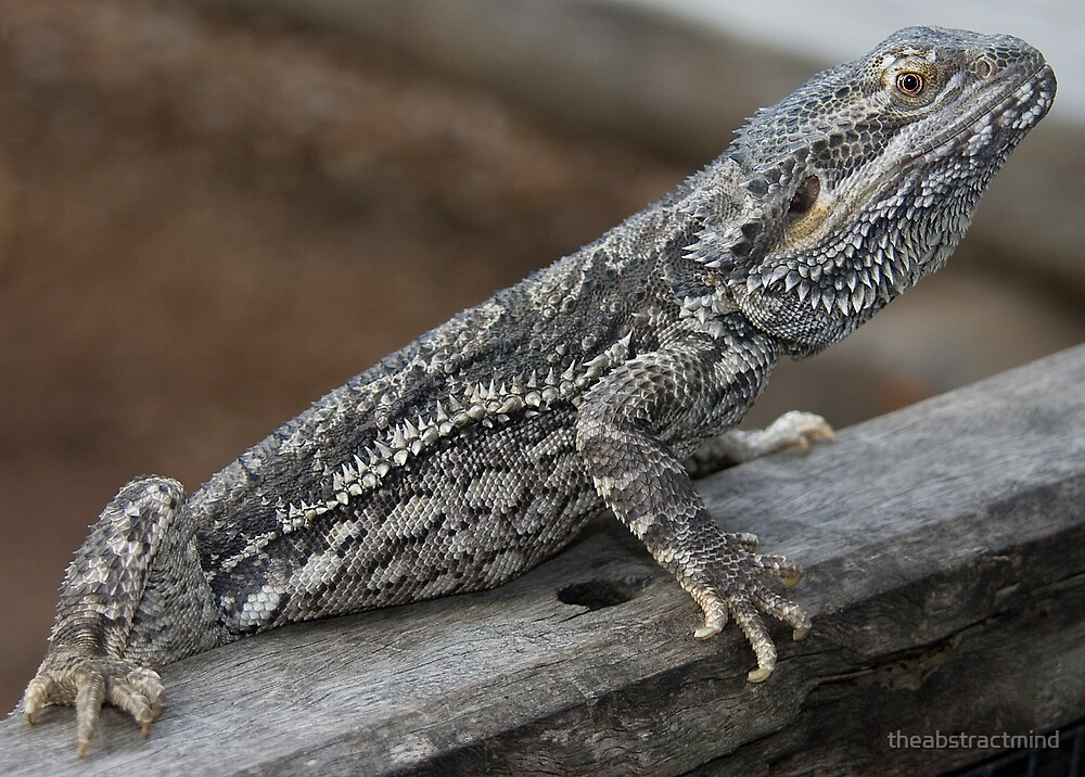 Eastern Bearded Dragon by theabstractmind
