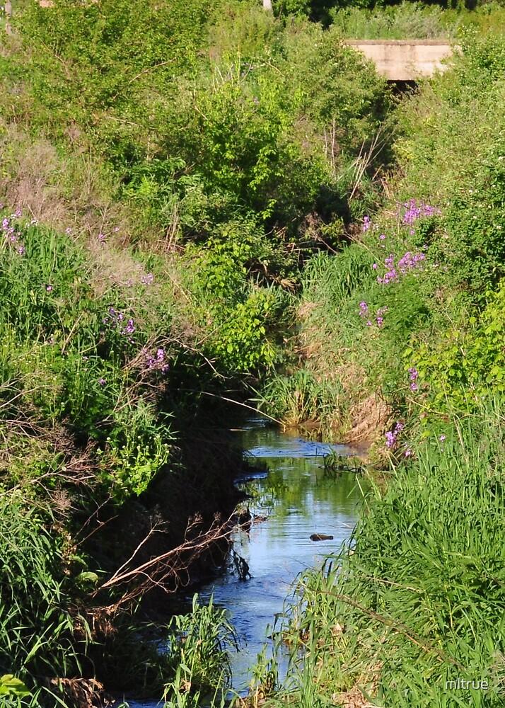 Purple flowers along a small stream by mltrue