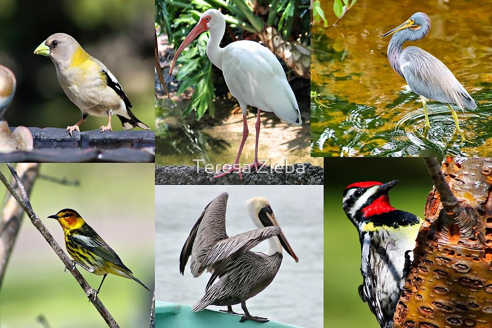 Bird Collage by Teresa Zieba