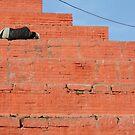 Nepal by David Spencer