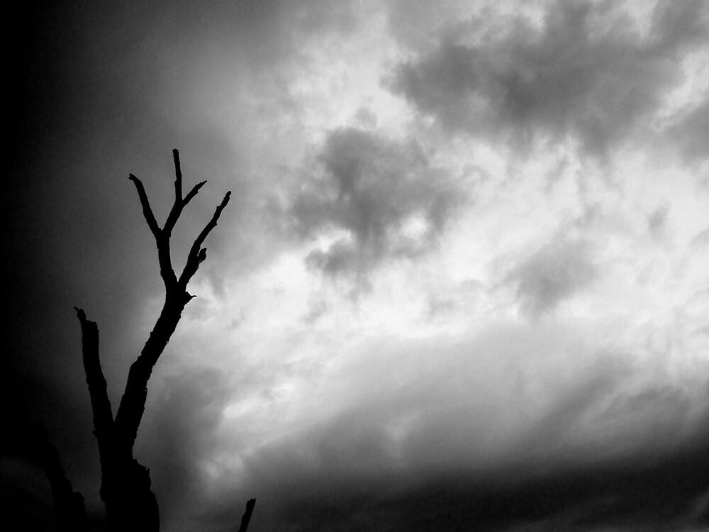 Stormy Day by ein22