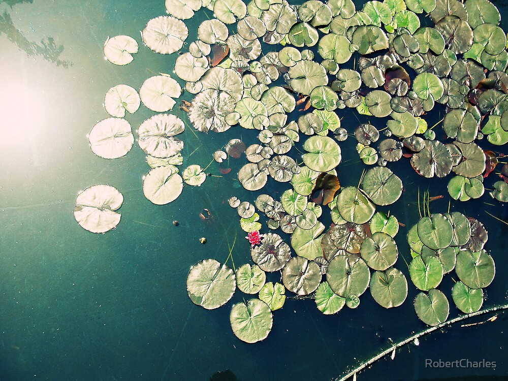 Lily Pads by RobertCharles