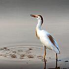 Cattle Egret by Viv Thompson