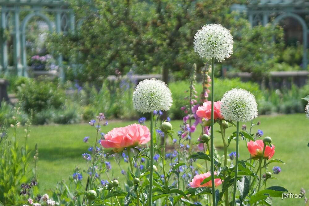 Garden  by jeffrae