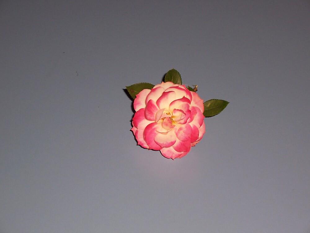 Flower by mamastoyracing