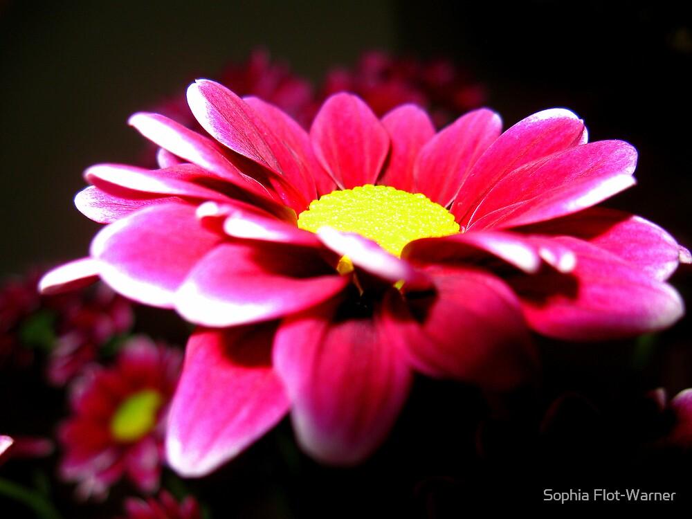 Smell that Daisy by Sophia Flot-Warner
