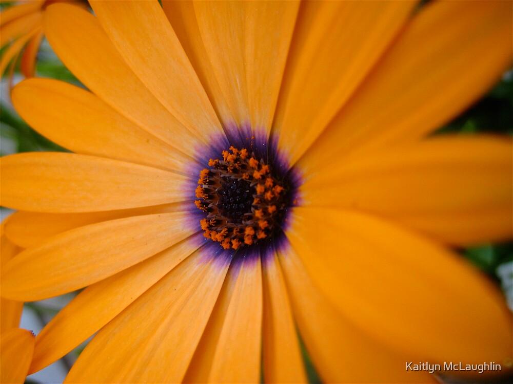 If a flower was a hug by Kaitlyn McLaughlin