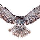 Power - Great Grey Owl by Jim Cumming