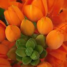 Orange Buds by Tama Blough