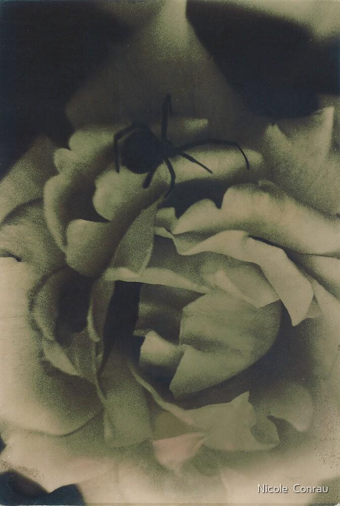 Black Widow by NicoleConrau