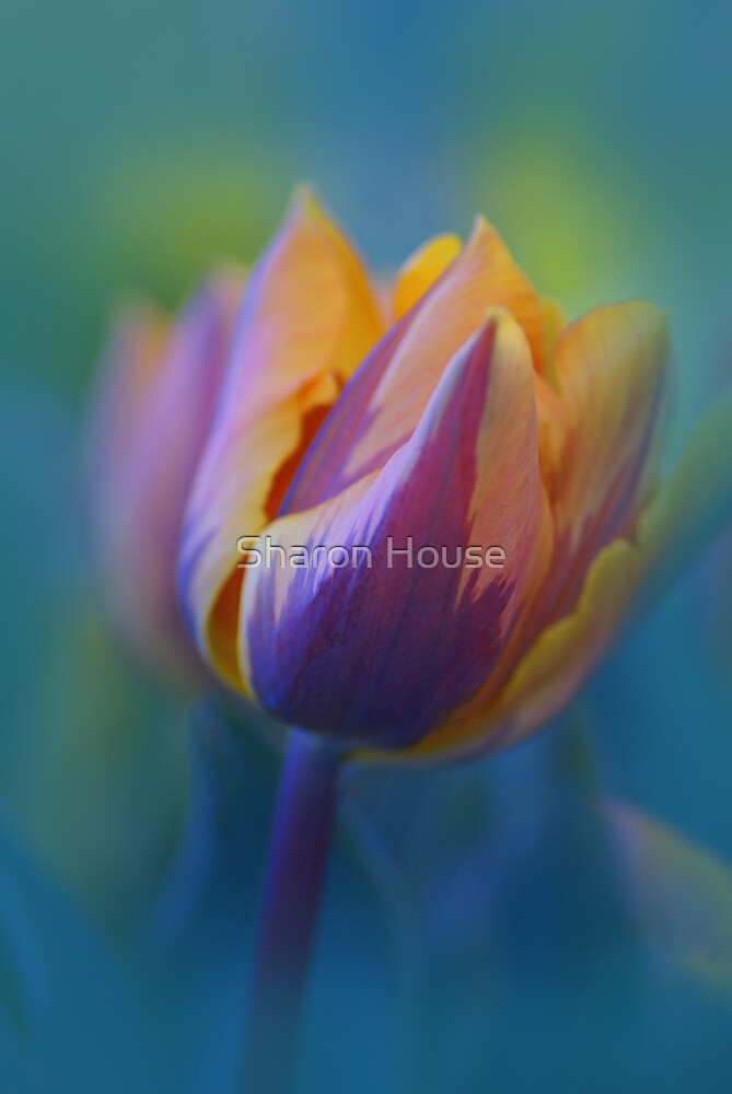 I Stand Alone by Sharon House
