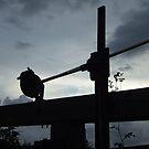 Canal lockgate at dusk by slugman