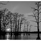 Sunset over Reelfoot Lake by Kevin Price