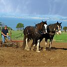 Working horses pulling uphill. by Bev Pascoe