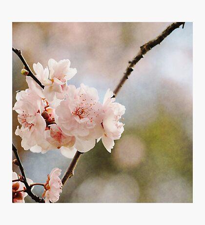 Firey Blossom Photographic Print