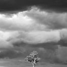 Stormy skies and tree  by PeterDamo