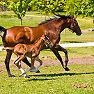 1 days old stallion-muscles by Lars Klottrup