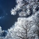 Infrared Tree With Curved Branch by L.D. Franklin