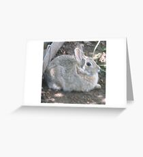 Is Easter over? Greeting Card
