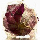 Frozen beauty *4 by Inese