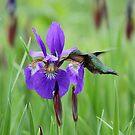 The Hummingbird and the Iris by Linda Crockett