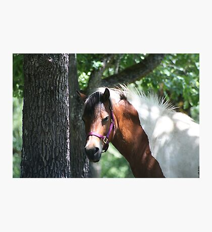New pony in the Family Photographic Print