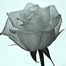 My beautiful Rose by julie08