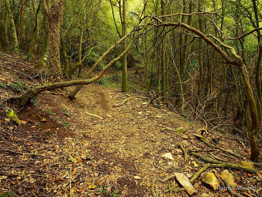 Wild path by Patrick Morand
