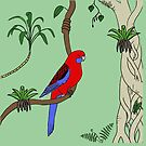 Crimson Rosella by Rob Price
