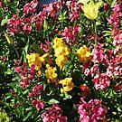 Flowerbed - Preston Temple von BlueMoonRose