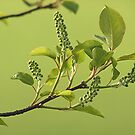 Beautiful Green of Spring by Stephen Thomas