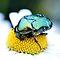 BEETLE MANIA CHALLENGE ~ Bugs and Animals on Flowers in Macro