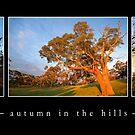 Adelaide Hills autumn ....... by hillsrain