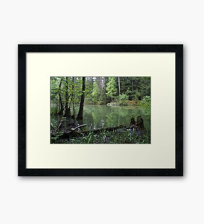Silence of the forest lake Framed Print
