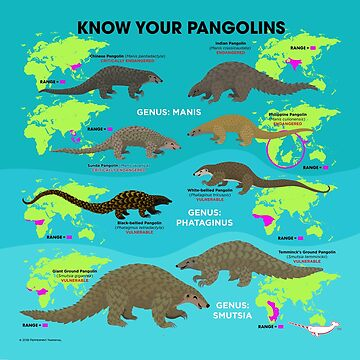 Know Your Pangolins by PepomintNarwhal