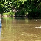 Wade fishing in the White Water River by barnsis