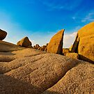 Joshua Tree Shapes by photosbyflood