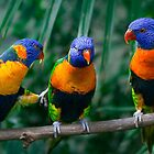 Rainbow Lorikeet IV by Didi Bingham