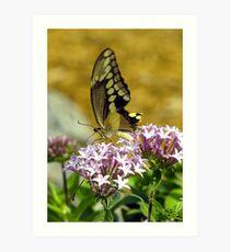 Arnolds Butterfly Art Print