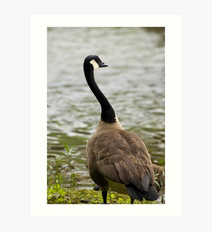 Goose Neck Art Print