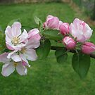 blossom on branch by Ann Persse