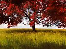 The Red Tree by believer9