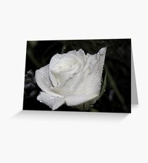 *WHITE ROSE* Greeting Card
